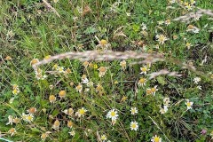 Cronin-Movers-Meadow